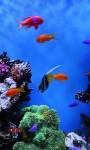 Amazing Fish in the sea images HD wallpaper screenshot 3/6