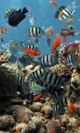 Amazing Fish in the sea images HD wallpaper screenshot 4/6