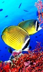 Amazing Fish in the sea images HD wallpaper screenshot 6/6