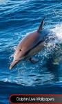 Dolphin Live Wallpapers Best screenshot 1/6