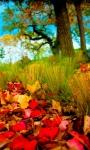 Amazing Fall season views HD Wallpaper screenshot 1/6