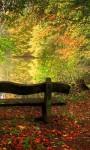 Amazing Fall season views HD Wallpaper screenshot 3/6