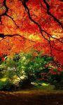 Amazing Fall season views HD Wallpaper screenshot 4/6