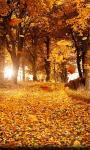 Amazing Fall season views HD Wallpaper screenshot 6/6