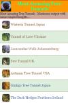 Most Amazing Tree Tunnels screenshot 2/3