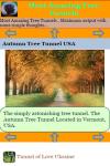 Most Amazing Tree Tunnels screenshot 3/3