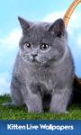 Kitten Live Wallpapers screenshot 1/6