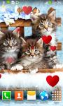 Kitten Live Wallpapers screenshot 2/6