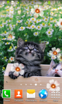Kitten Live Wallpapers screenshot 4/6