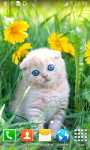 Kitten Live Wallpapers screenshot 6/6