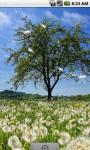 Dandelion Field Cool Live Wallpaper screenshot 1/4