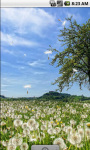 Dandelion Field Cool Live Wallpaper screenshot 2/4