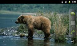 Bears Everywhere - Wallpaper Slideshow screenshot 1/4