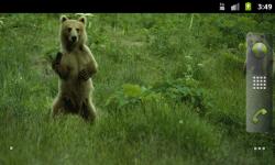Bears Everywhere - Wallpaper Slideshow screenshot 2/4