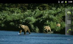 Bears Everywhere - Wallpaper Slideshow screenshot 3/4