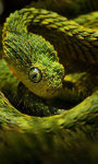 Viper Snakes HD Wallpaper screenshot 1/6