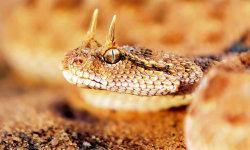 Viper Snakes HD Wallpaper screenshot 2/6