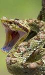 Viper Snakes HD Wallpaper screenshot 5/6