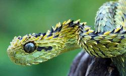 Viper Snakes HD Wallpaper screenshot 6/6
