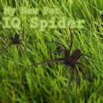 IQ Spider German screenshot 1/1
