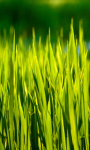 Summer Grass Live Wallpaper screenshot 1/3