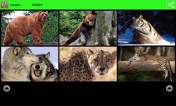 Wildlife Animal Wallpapers screenshot 1/6