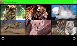 Wildlife Animal Wallpapers screenshot 2/6