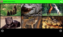 Wildlife Animal Wallpapers screenshot 3/6