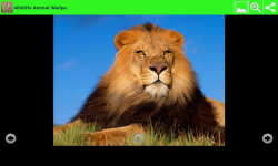 Wildlife Animal Wallpapers screenshot 5/6