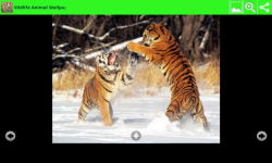 Wildlife Animal Wallpapers screenshot 6/6