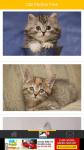 Cat Photos Free screenshot 2/6