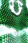 Green Snake Skin Live Wallpaper screenshot 1/2