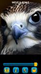 Birds Wallpapers free screenshot 6/6