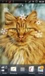 Beautiful Cat Live Wallpaper screenshot 1/3
