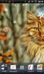 Beautiful Cat Live Wallpaper screenshot 2/3