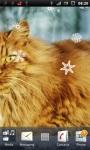 Beautiful Cat Live Wallpaper screenshot 3/3