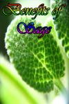 Benefits of Sage screenshot 1/3