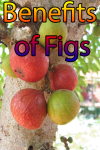 Figs Benefits screenshot 1/4