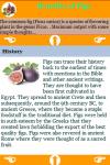 Figs Benefits screenshot 4/4