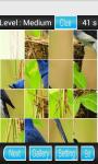 Bird Puzzle Games screenshot 2/3