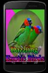 Dazzling Exotic Birds screenshot 1/3