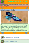 Dazzling Exotic Birds screenshot 3/3