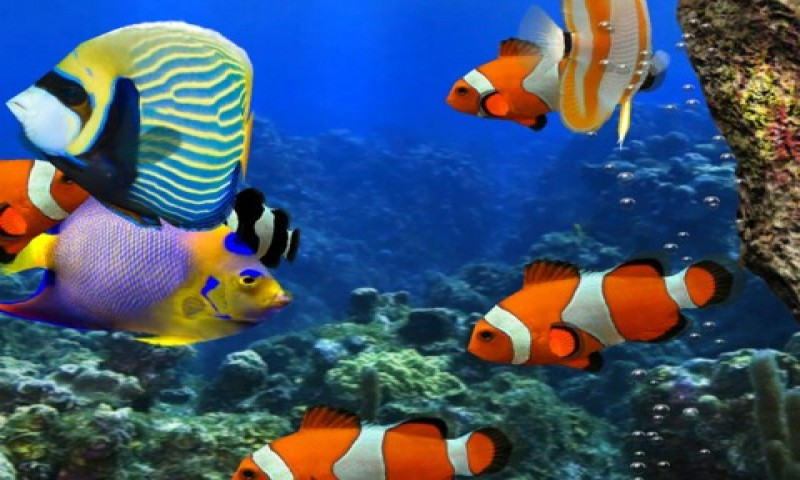 Live Fish Wallpaper Free 3d hd live fish wallpaper apk download for ...