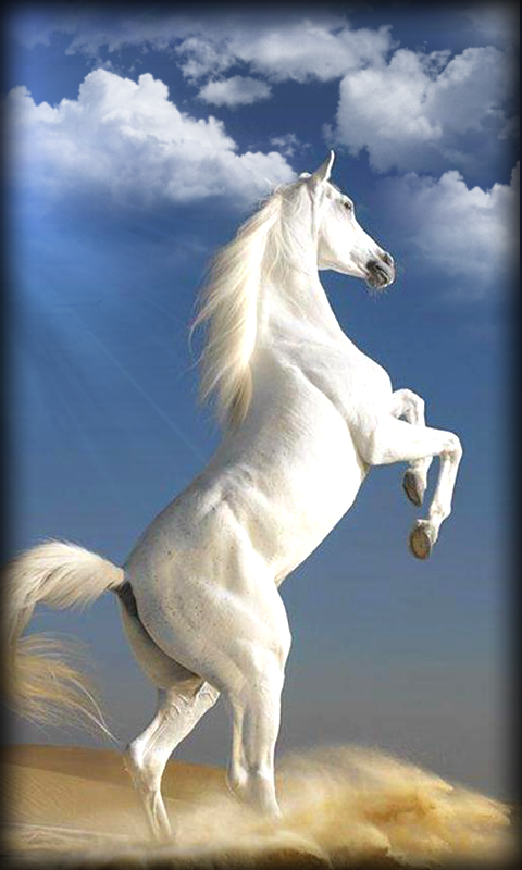Free Horse Live Wallpaper Horse Apk Download For Android